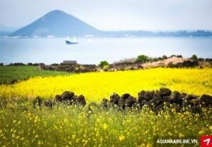 Gợi ý các hòn đảo tuyệt đẹp mê hoặc du khách tại Hàn Quốc