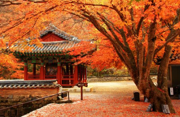 Cảnh đẹp mùa thu Hàn Quốc