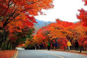 Những điểm đến lý tưởng để chiêm ngưỡng sắc thu tại Hàn Quốc