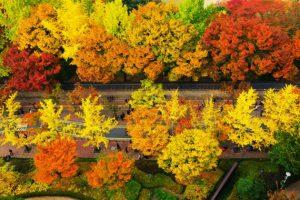 Những con đường đẹp như cổ tích ở Hàn Quốc
